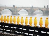 le-phare-association-pont-pingouin